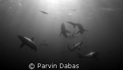 black tips by Parvin Dabas