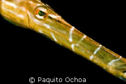 Its a trumpet fish taken in Darialaut (dive site), Anilao... by Paquito Ochoa