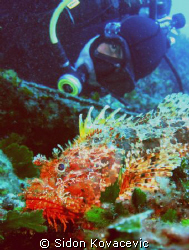 diver and scorpio fish on island solta 30m deep by Sidon Kovacevic