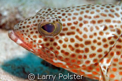 Fishface, D300, 105VR by Larry Polster
