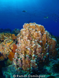 Beautiful coral reef landscape at Cabo Pulmo Marine Park,... by Ramón Domínguez