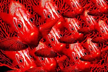 squirrelfish - red sea - composing - photoshop by Manfred Bail