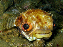 Fat Lips - Taken at Kaputian divesite Samal Island, Davao... by Arthur Castillo