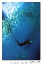 Sardines Run-2008 by Sergiy Glushchenko