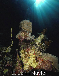 red sea corals. by John Naylor