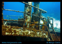 The Sea Star ship wreck in Grand Bahamas. by Margo Cavis