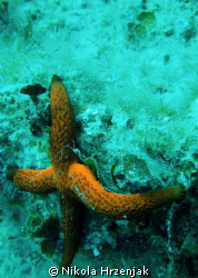 starfish on vacation by Nikola Hrzenjak