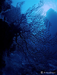 This photo was taken at Columbia Pinnacles while diving o... by Steven Anderson