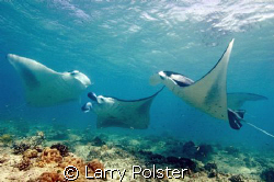 Manta cleaning station, Sea Queen liveaboard just ouside ... by Larry Polster