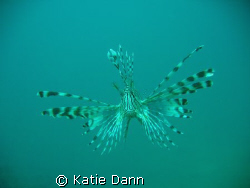 Lionfish taken with Canon G9 by Katie Dann