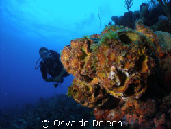 The is a nice and cool site to diving by Osvaldo Deleon