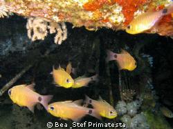 Fish in a wreck. Canon G9 with Inon D-2000 strobe. by Bea & Stef Primatesta
