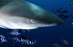 Oceanic Shark D100 12-24mm by Eric Orchin