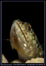 Smile Little Lezard Fish..... :O) ...... by Michel Lonfat