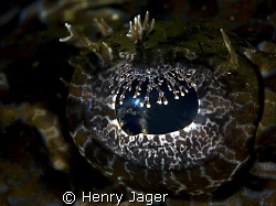 """""""Croco's Eye""""   taken at the Raja Ampat, West Papua by Henry Jager"""