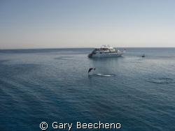 A dolphin came jumping past, splash... splash... splash. ... by Gary Beecheno