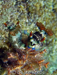 Nembrotha Wedding at Eden's Garden, Canon S70 with Macro ... by Beate Krebs