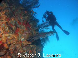 at the wall!! in balcones dive site at parguera area!!PUE... by Victor J. Lasanta