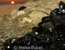 shell-shine..:-) by Melita Bubek