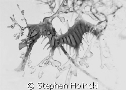 Now this is a DRAGON.  Original taken with a Canon A630, ... by Stephen Holinski