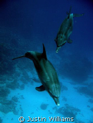A great dive with several dolphins at Abu Nahas. Camera u... by Justin Williams
