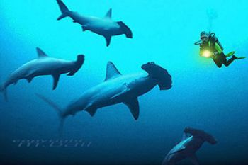 red sea - Sanganeb reef - hammerheads - COMPOSING >  hamm... by Manfred Bail