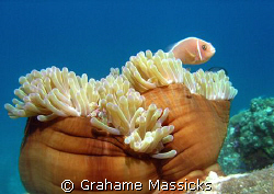 Shot off Tioman Island with an Olymus 5060 by Grahame Massicks