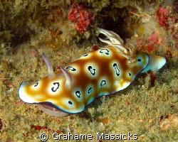 Found off Tioman Island, Malaysia.  Shot with Olympus 5060. by Grahame Massicks
