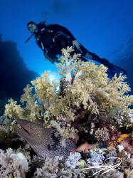 Moray Eel & Diver by Nicholas Samaras