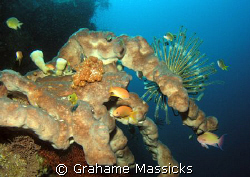 Typical reefscape eastcoast of Bali.  Shot with Olympus 5060 by Grahame Massicks