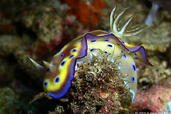 A nudi showing its colours by Andrew Macleod