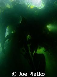 Kelp beds This shot was taken near the Breakwater in mon... by Joe Platko