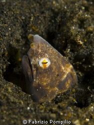 lembeh strait cacon 400d  canon 60 macro flash sea&sea 11... by Fabrizio Pompilio