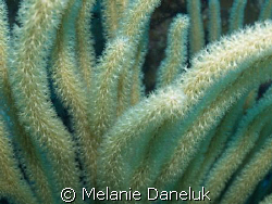 I think the different corals are so amazing!!
