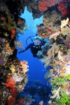 Diver enjoying the scenery in Truuk, Nikonos V w/15mmWA by Tom Huff