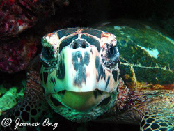 Finalist for Sipadan Next Top Model (Shell Category). Too... by James Ong