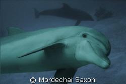 Dolphin Reef, Eilat, Israel.  Nikkonos V, no flash. by Mordechai Saxon