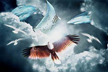 COMPOSING > eagle/manta/shark/birds/mackarels by Manfred Bail