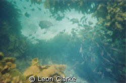 This is a picture taken free diving near the pinnacles in... by Leon Clarke
