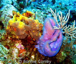 Grand Cayman August 2008.  Photo taken with a Canon SD550. by Bonnie Conley