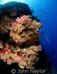 corals at the brothers.red sea. by John Naylor