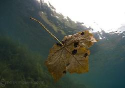 Autumn leaf. Capernwray. D200, 10.5mm. by Derek Haslam