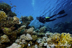 Diver end a dive on a beautiful top reef in the red sea! by Barbara Schilling