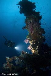 Truk Lagoon (Chuuk), Micronesia.  Diver on wreck of Truk ... by Amanda Cotton