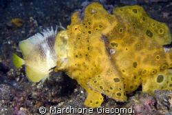 Good lunch. Lembeh strait 2008