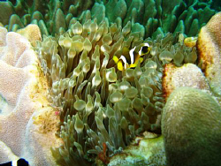 On Sodwana Bay, 2 Mile reef at Caves and Overhangs. Taken... by Werner Van Der Berg