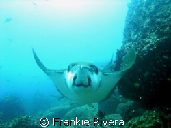 A BIG SMILE from an Eagle Ray, @ North Seymor, Galapagos ... by Frankie Rivera