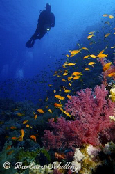 Beautiful softcorals with Antheas everywhere! by Barbara Schilling