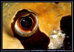 The Eye... :O) .... by Michel Lonfat