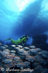 Diver checking out the soldierfish before going back up t... by Barbara Schilling